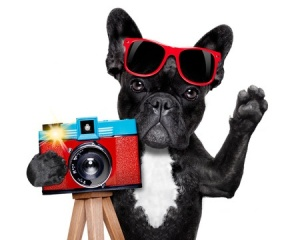 dog taking picture